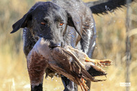 Flight A Dog #46 Teal